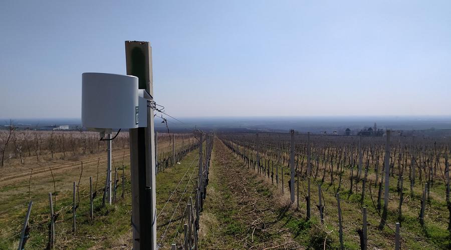 SREM vineyard