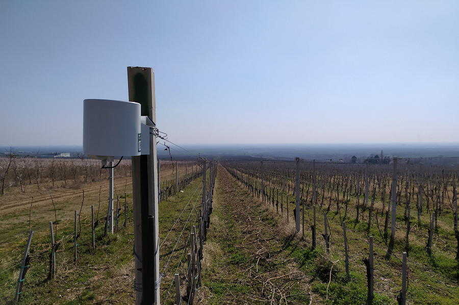 SREM vineyard